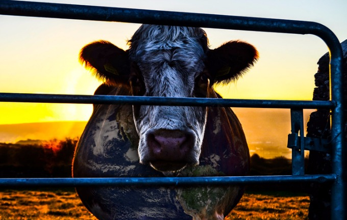 cowspiracy+campo+cebada+madrid